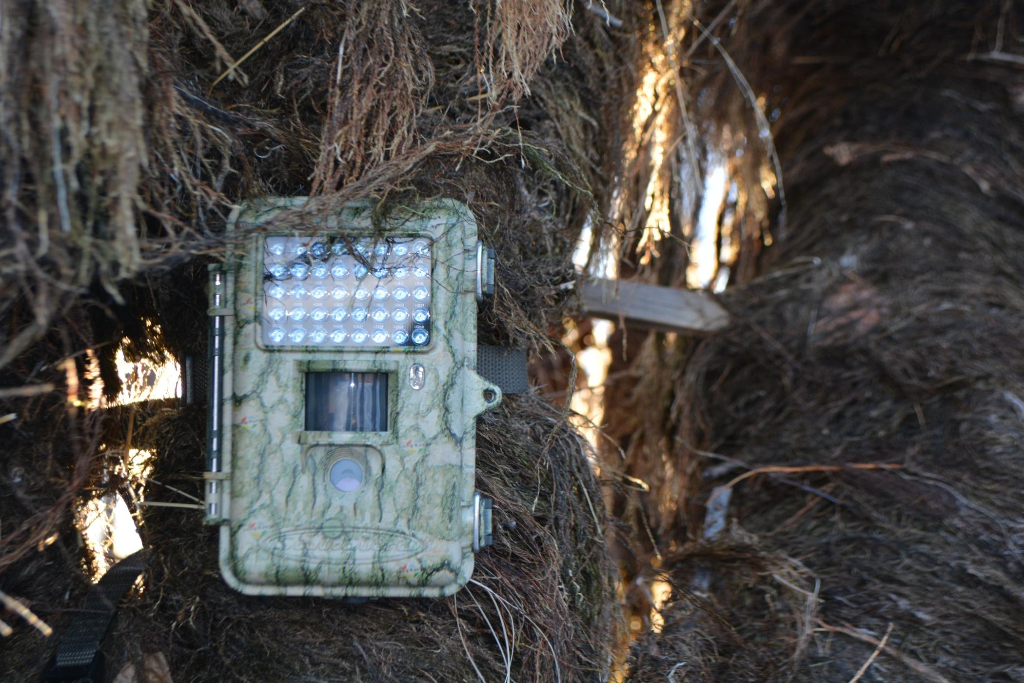 главное как вычислить фотоловушку в лесу этом разделе собраны